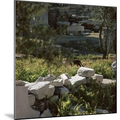 Picture of a cat in Athens. Artist: Unknown-Unknown-Mounted Photographic Print