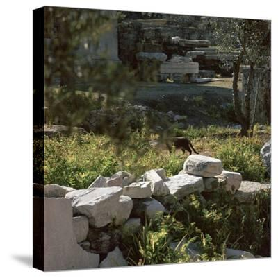 Picture of a cat in Athens. Artist: Unknown-Unknown-Stretched Canvas Print