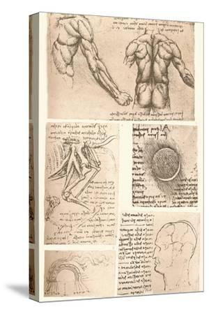 Four anatomical drawings, c1472-c1519 (1883)-Leonardo da Vinci-Stretched Canvas Print