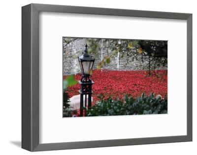 'Blood Swept Lands and Seas of Red', Tower of London, 2014-Sheldon Marshall-Framed Photographic Print