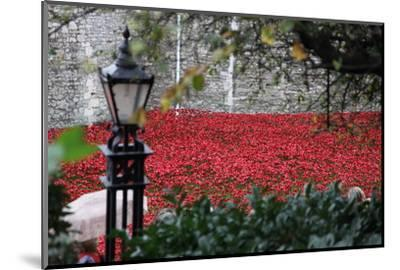 'Blood Swept Lands and Seas of Red', Tower of London, 2014-Sheldon Marshall-Mounted Photographic Print