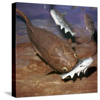 Model of a Coccosteus attacking a Diplacanthus-Unknown-Stretched Canvas Print