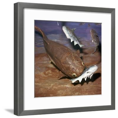 Model of a Coccosteus attacking a Diplacanthus-Unknown-Framed Giclee Print