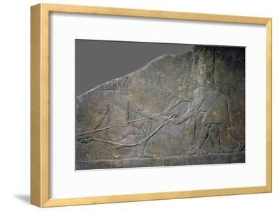 Stone panel from the North Palace of Ashurbanipal, Nineveh, northern Iraq, Neo-Assyrian, c645 BC-Unknown-Framed Giclee Print