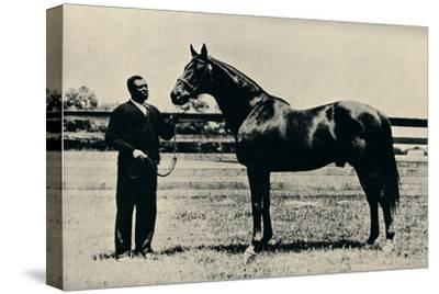 Thoroughbred racehorse, Man O' War, c1920-Unknown-Stretched Canvas Print