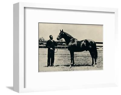 Thoroughbred racehorse, Man O' War, c1920-Unknown-Framed Photographic Print