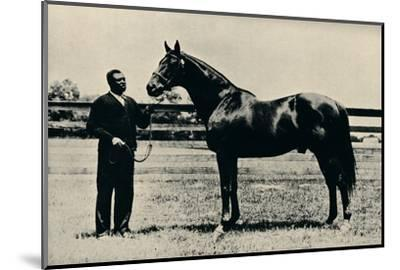 Thoroughbred racehorse, Man O' War, c1920-Unknown-Mounted Photographic Print