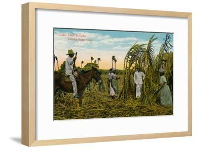 Cuba: Corte de Cana. Cutting Sugar Cane, c1910-Unknown-Framed Giclee Print