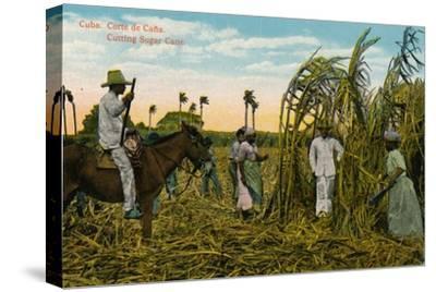 Cuba: Corte de Cana. Cutting Sugar Cane, c1910-Unknown-Stretched Canvas Print