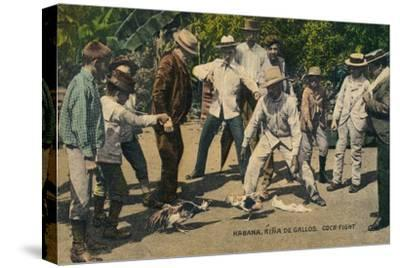Habana. Rina de Gallos. Cock-fight, c.1900s-Unknown-Stretched Canvas Print