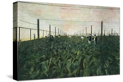 Tobacco Gathering, 1900-Unknown-Stretched Canvas Print