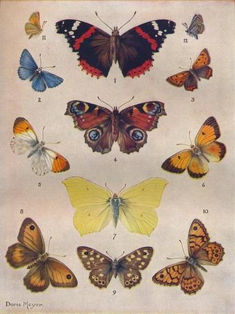 'Beautiful Butterflies of the British Isles', c1934-Unknown-Framed Giclee Print