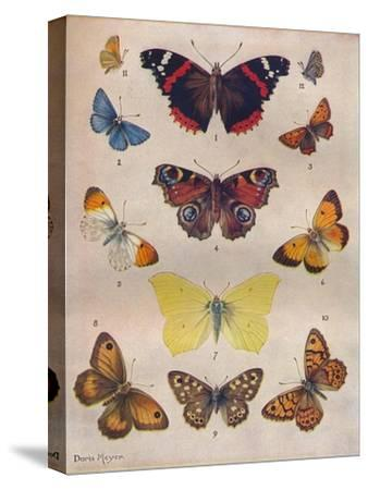 'Beautiful Butterflies of the British Isles', c1934-Unknown-Stretched Canvas Print