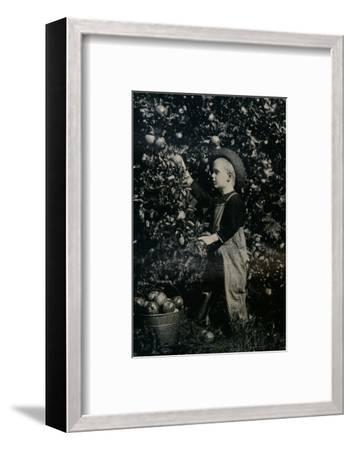 'In One Of Ontaario's Fruitful Orchards', c1934-Unknown-Framed Photographic Print