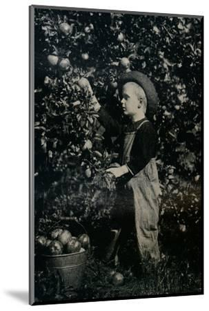 'In One Of Ontaario's Fruitful Orchards', c1934-Unknown-Mounted Photographic Print