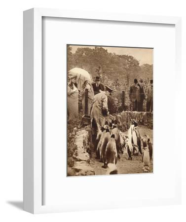 Penguins on parade for the King, 1934 (1935)-Unknown-Framed Photographic Print