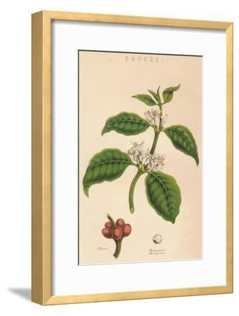 'Coffee', c19th century-Unknown-Framed Giclee Print