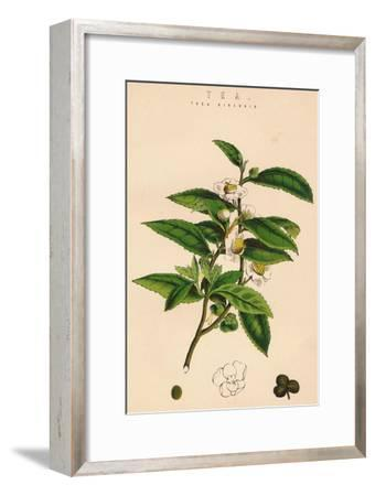 'Tea', c19th century-Unknown-Framed Giclee Print