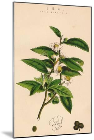 'Tea', c19th century-Unknown-Mounted Giclee Print