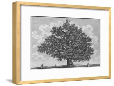 'The Penshurst Oak', 1794-Unknown-Framed Giclee Print