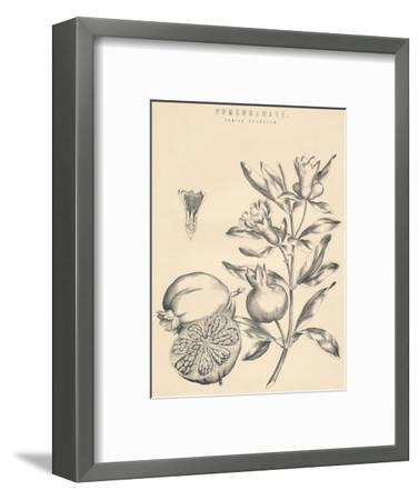 'Pomegranate', c19th century-Unknown-Framed Giclee Print