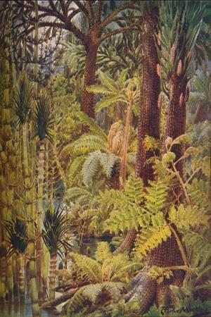 The gigantic vegetation of the Carboniferous Age, 1907-Unknown-Framed Giclee Print
