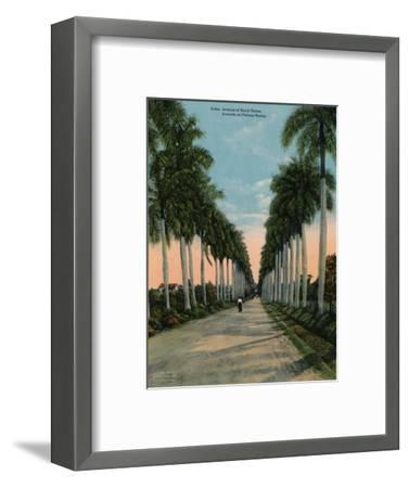 Avenue of royal palms, Cuba, c1920-Unknown-Framed Photographic Print