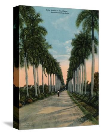 Avenue of royal palms, Cuba, c1920-Unknown-Stretched Canvas Print