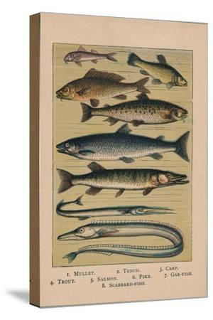 'Fish', 1907, (1907)-Unknown-Stretched Canvas Print