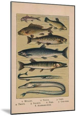 'Fish', 1907, (1907)-Unknown-Mounted Giclee Print