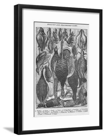 'Poultry and Feathered Game', 1907-Unknown-Framed Giclee Print
