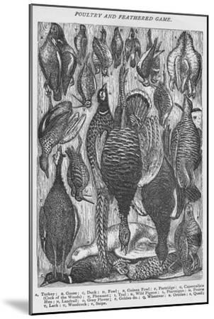 'Poultry and Feathered Game', 1907-Unknown-Mounted Giclee Print