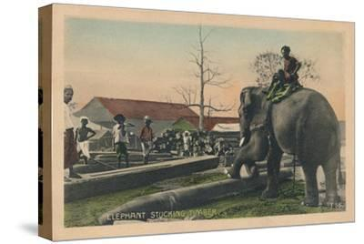'Elephant Stucking Timber',  c1900-Unknown-Stretched Canvas Print