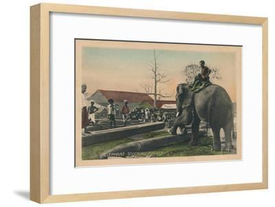 'Elephant Stucking Timber',  c1900-Unknown-Framed Giclee Print