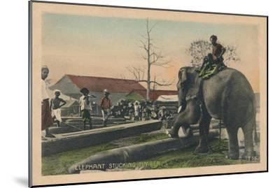 'Elephant Stucking Timber',  c1900-Unknown-Mounted Giclee Print