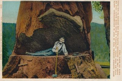 Wood Chopper-Showing Tree 46 Feet in Circumference. Santa Cruz Big Tree Grove, California, c1909-Unknown-Framed Giclee Print