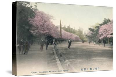'Cherry Blossoms At Uyeno Park Tokyo', c1910-Unknown-Stretched Canvas Print
