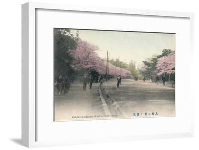 'Cherry Blossoms At Uyeno Park Tokyo', c1910-Unknown-Framed Giclee Print