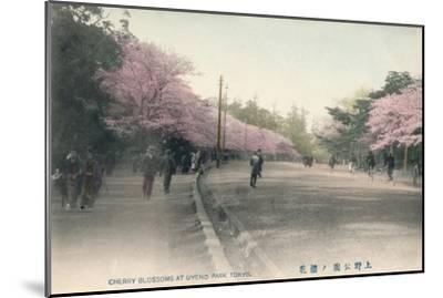 'Cherry Blossoms At Uyeno Park Tokyo', c1910-Unknown-Mounted Giclee Print