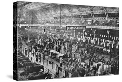 At the Smithfield Club cattle show, Agricultural Hall, Islington, London, 1902-Unknown-Stretched Canvas Print