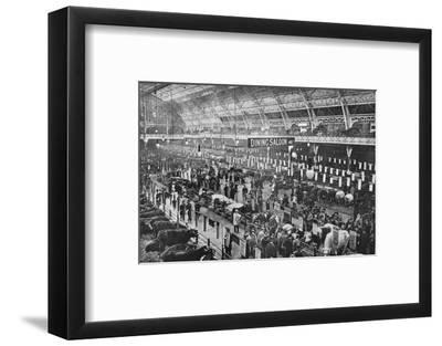 At the Smithfield Club cattle show, Agricultural Hall, Islington, London, 1902-Unknown-Framed Photographic Print