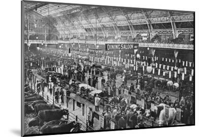 At the Smithfield Club cattle show, Agricultural Hall, Islington, London, 1902-Unknown-Mounted Photographic Print