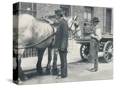 RSPCA inspector examining a horse, c1903 (1903)-Unknown-Stretched Canvas Print
