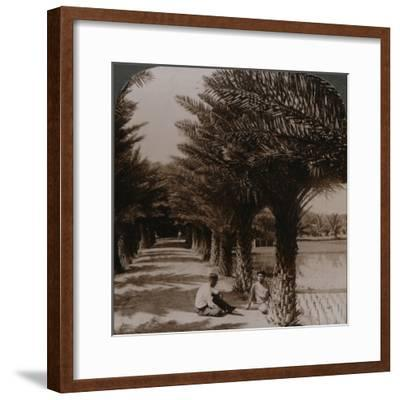 'Tropical beauty of an avenue of date palms, Moanalua near Honolulu, H. Is.' c1900-Unknown-Framed Photographic Print