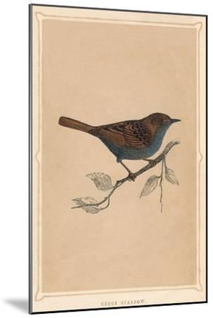 'Hedge Sparrow', (Prunella modularis), c1850, (1856)-Unknown-Mounted Giclee Print