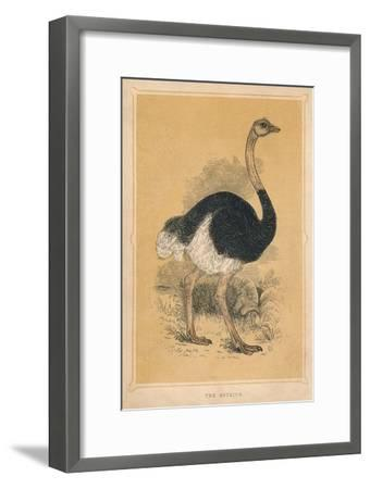 'The Ostrich', (Struthio camelus), c1850, (1856)-Unknown-Framed Giclee Print