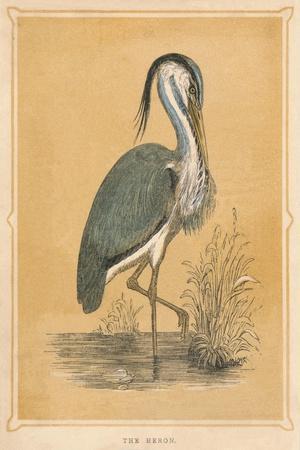'The Heron', (Ardeidae), c1850, (1856)-Unknown-Framed Giclee Print