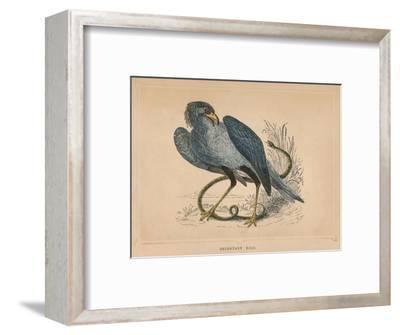 'Secretary Bird' (Sagittarius serpentarius), c1850, (1856)-Unknown-Framed Giclee Print