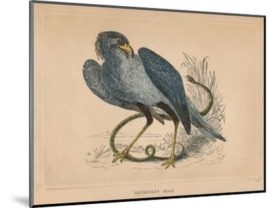 'Secretary Bird' (Sagittarius serpentarius), c1850, (1856)-Unknown-Mounted Giclee Print