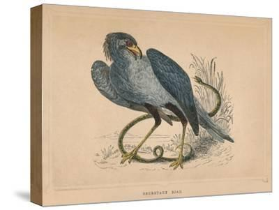 'Secretary Bird' (Sagittarius serpentarius), c1850, (1856)-Unknown-Stretched Canvas Print